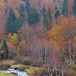 Mountain river in autumn — Stockfoto