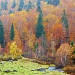 Mountain river in autumn — Stock Photo #6346029