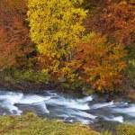 Autumn brook — Stock Photo