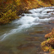 Autumn brook — Foto Stock