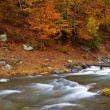 Stock Photo: Autumn brook
