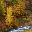 Autumn brook — Stock Photo #6346048