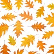 Assortment of leaves — Stock Photo