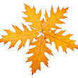Five autumn leaves — Stock Photo