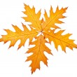 Five autumn leaves - Stock Photo