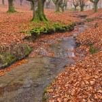 Colors in autumn season — Stock Photo #6347254
