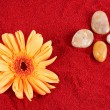 Daisy and four stones on the sand — Stock Photo