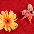 Daisy and starfish over four stones on the sand — Stock Photo