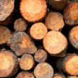 Logs stacked background — Stock Photo #6348297