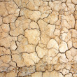 Parched earth - Stock Photo
