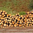 Panoramic view of logs stacked — Stock Photo