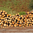 Panoramic view of logs stacked - Stock Photo