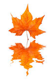 Maple leaf reflected — Stock Photo