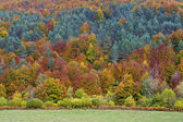 Autumn colors in the forest — Stock Photo