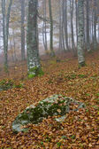 Colors in the foggy autumn — Stock Photo