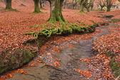 Colors in autumn season — Stock Photo