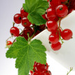 Currant — Stock Photo #5756001
