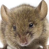 The Mouse — Stock Photo