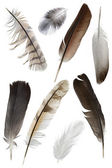 Feather — Stockfoto
