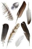羽毛 — 图库照片