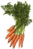 Bunch of fresh organic carrots — Stock Photo