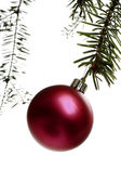 Christmas decorations on the branch — Stock Photo