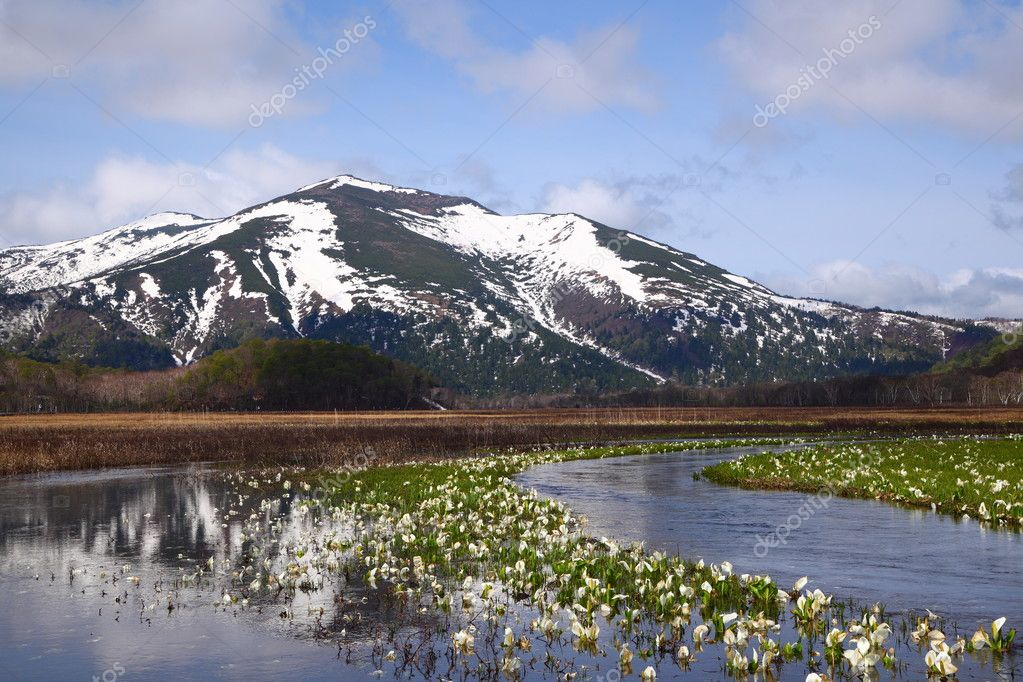Lysichiton camtschatcense and Mt.Shibutu of OZE national park in japan  Stock Photo #5777909