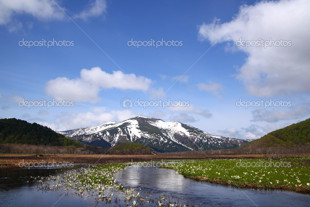 Lysichiton camtschatcense and Mt.Shibutu of OZE national park in japan — Stock Photo #5777917