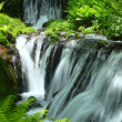 Fresh green and waterfall — Stock Photo