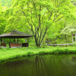 Stock Photo: Fresh green arbor and pond