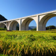 Highway bridge with rice field — Stock Photo