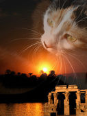 Egypt cat composing — Stock Photo