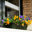 Flowers decorating window - Stock Photo