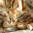 3D anaglyph of two sleeping cats - Stock Photo