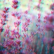 3D anaglyph ofa lavender plant field - Stock Photo