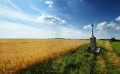 красота поле — Стоковое фото