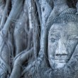 Buddha head — Foto Stock #5813245