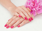 Pink manicure and a flower — Stock Photo