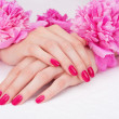 Manicure with pink fingernails and peony flowers — 图库照片