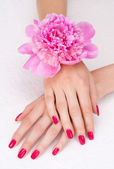 Top view of woman hands with pink manicure and flower — Stock Photo