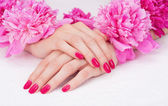 Manicure with pink fingernails and peony flowers — Stock Photo