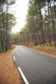 Forest with road — Stock Photo