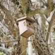 Bird house pending — Stock Photo