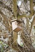 Bekleyen kuş evi — Stok fotoğraf