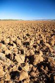 Cultivation field — Stockfoto