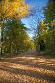 Otoño parque camino grande — Foto de Stock
