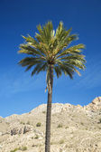 Palm with blue sky — Stock Photo