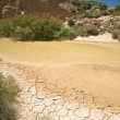 Oasis in bardenas reales — Stock Photo #6536332