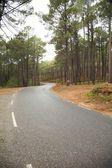 Vägen genom skogen — Stockfoto