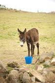 Donkey with blue cube — Stock Photo